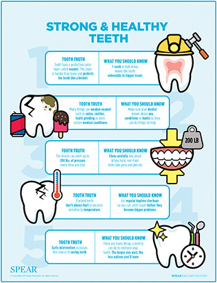 healthy teeth chart